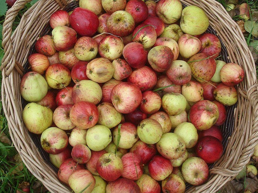 Worley's Cider - Farmdrop Local Food Delivery