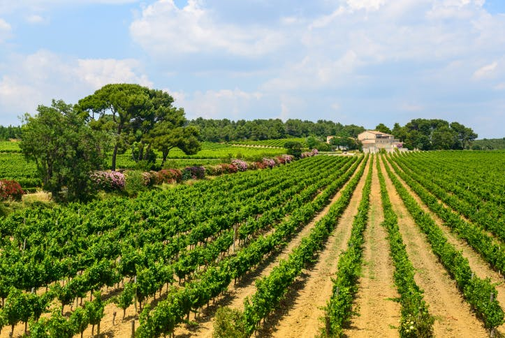 Les Vignobles Montagnac - Farmdrop Local Food Delivery