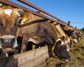 Ivy House Farm Dairy