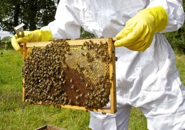 Paynes Southdown Bee Farm - Farmdrop Local Food Delivery