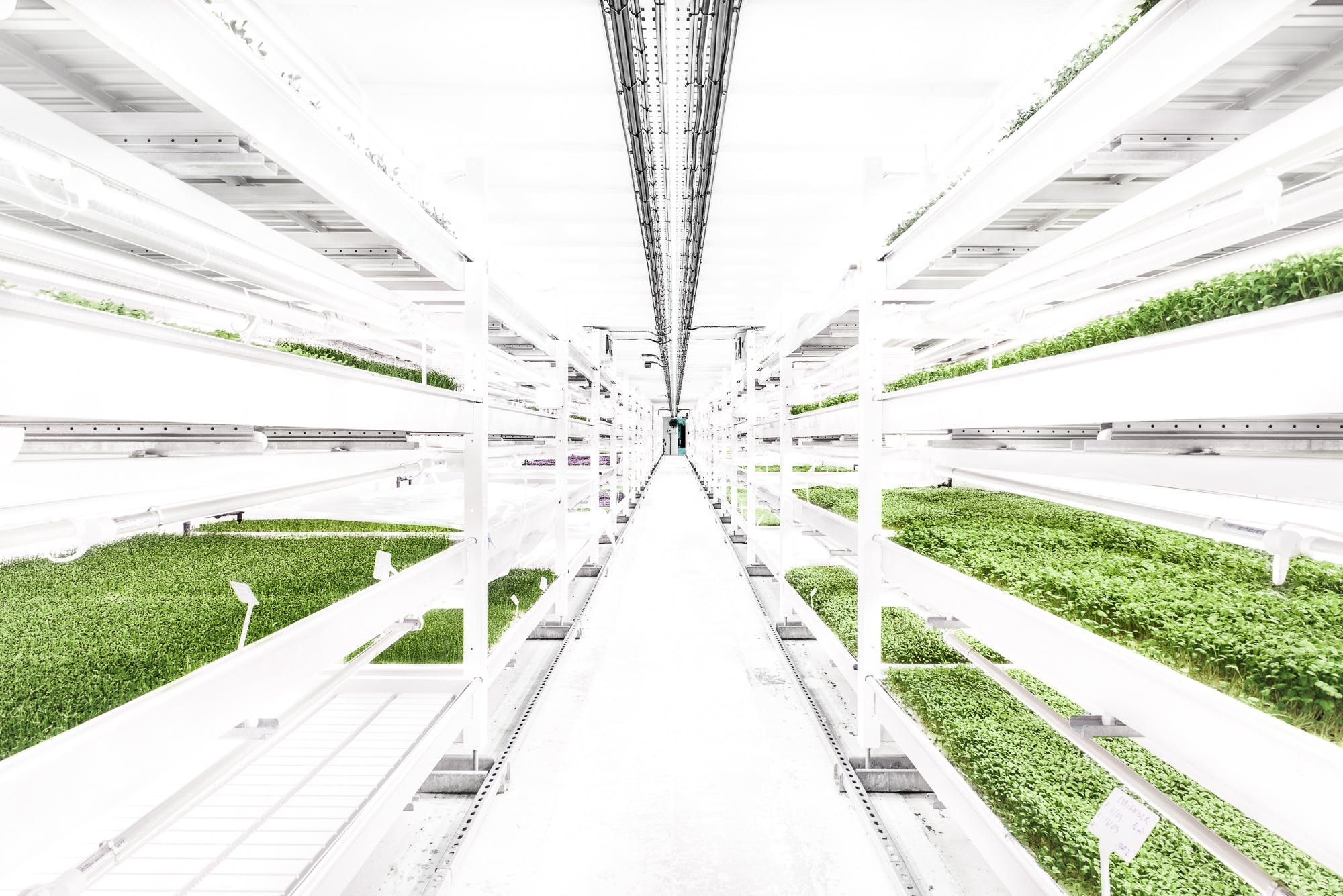 Growing Underground - Farmdrop Local Food Delivery