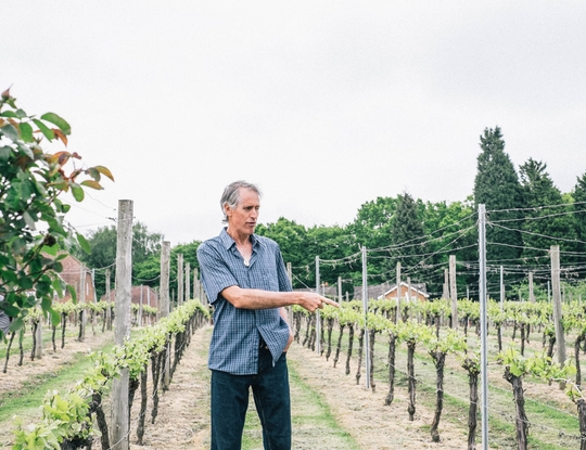 Bluebell Vineyard - Farmdrop Local Food Delivery