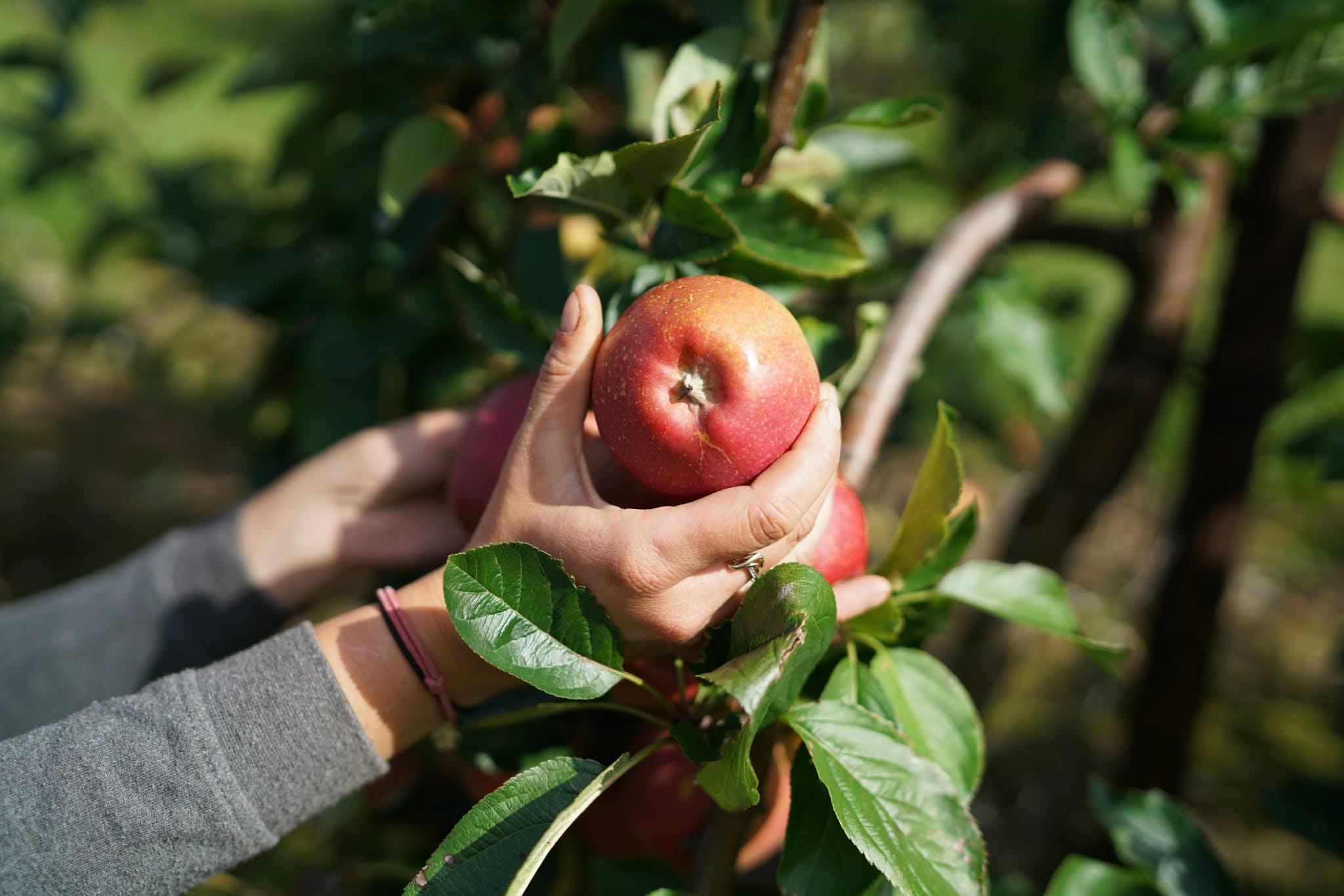 Brogdale Fine Fruits - Farmdrop Local Food Delivery