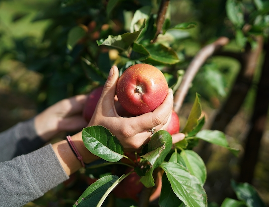 Brogdale Fine Fruits - Farmdrop Local Food Delivery