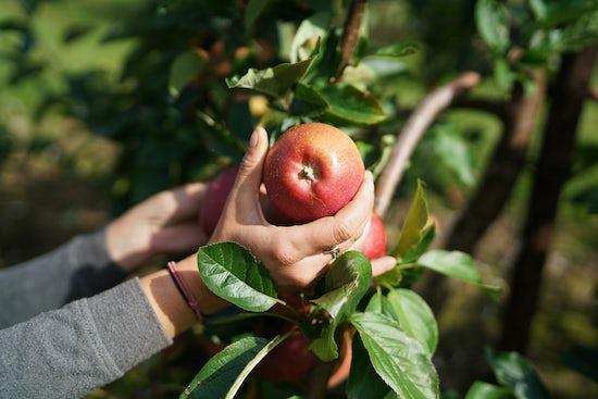 Brogdale Fine Fruits