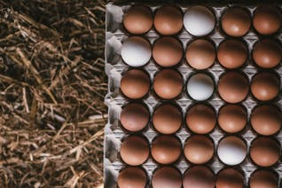 Organic Eggs (Pullet)