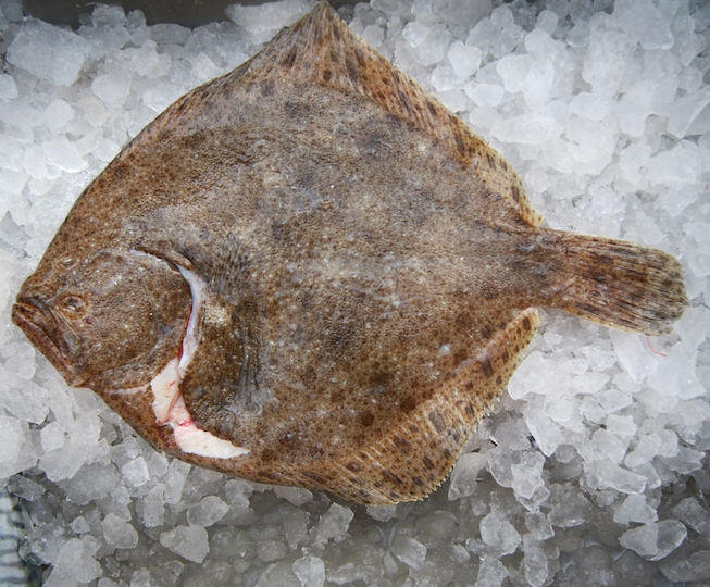 Buy whole turbot from handpicked shellfish online for Turbot fish price