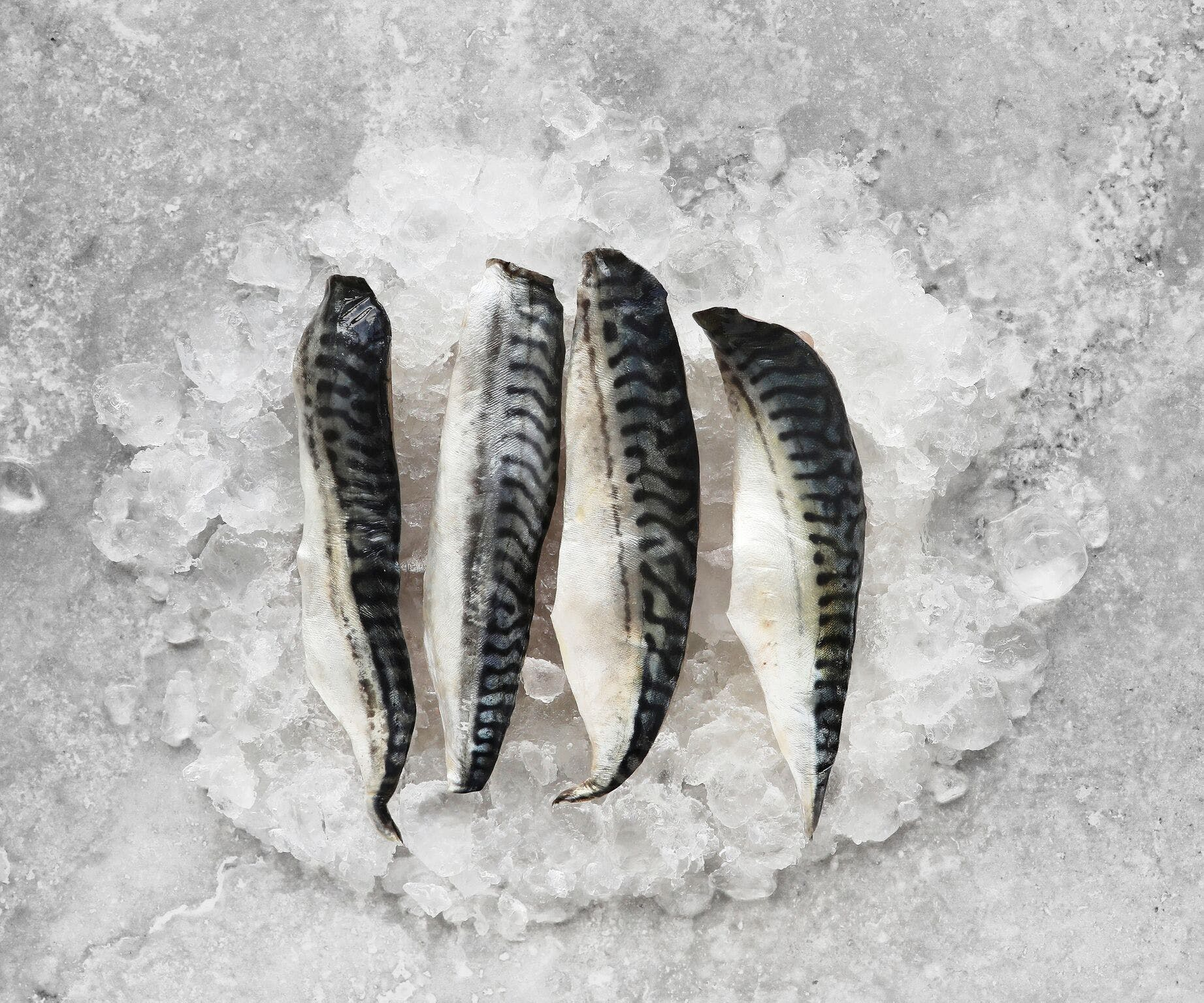 Line Caught Mackerel Fillets