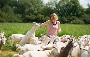 Pasture Raised Rack of Kid