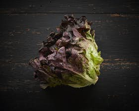 Organic Seasonal Red Lettuce Head