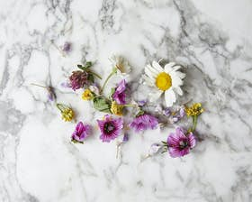 Wild Edible Flower Mix