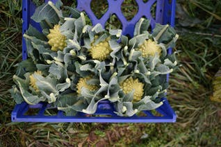 Purton Organic Small Veg Bundle (No Potatoes)